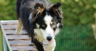 יתרונות וחסרונות של לתת לכלב שלכם לטייל לבד ולחזור