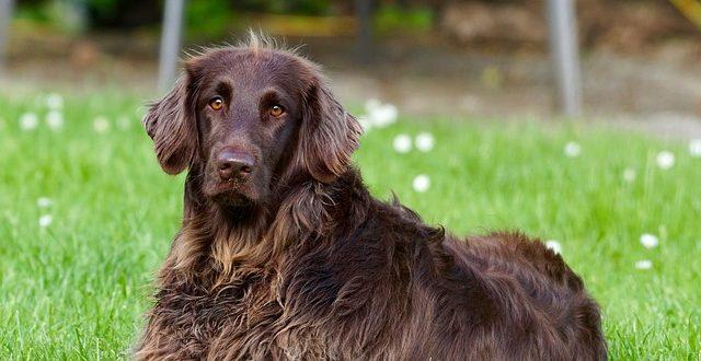באיזה גיל רצוי לסרס את הכלב